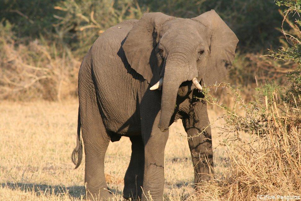 リウォンデ国立公園には象が多い