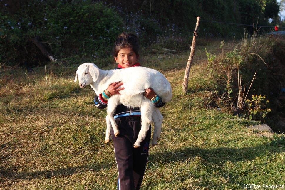 ヤギを持ち上げる女の子(アスタム村/ネパール)