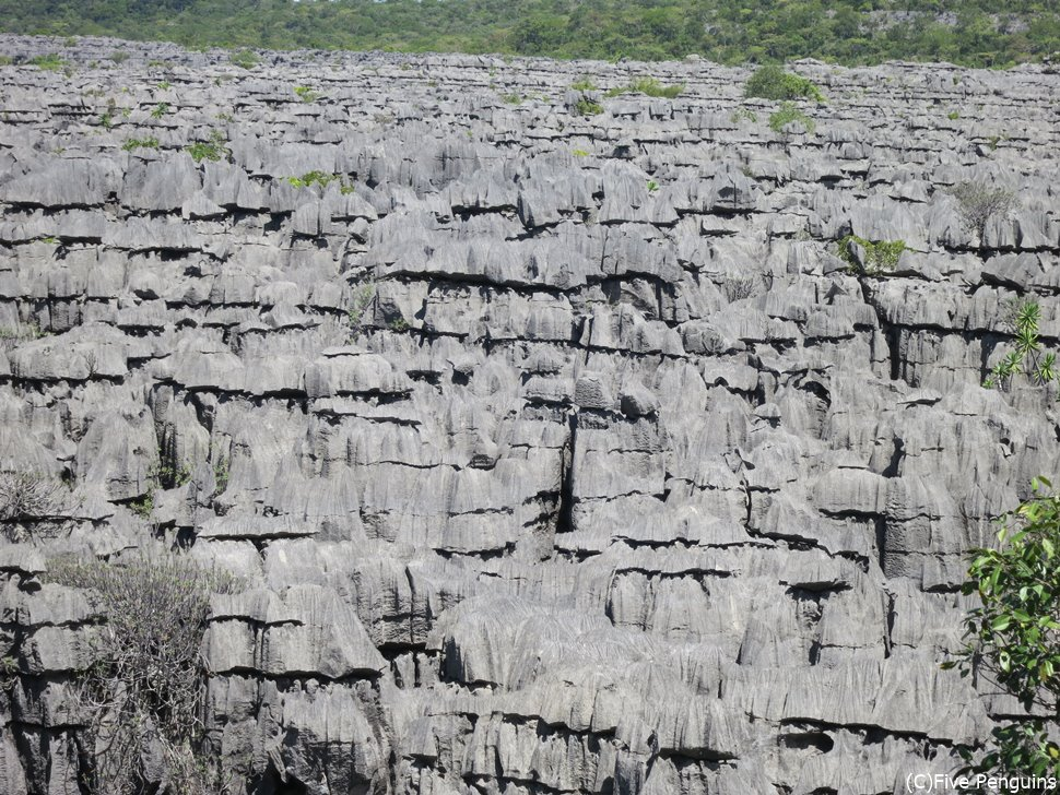 こちらはアンカラナ特別保護区のツインギー