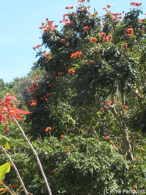 緑が多く、花がたくさん 咲くドミニカ国