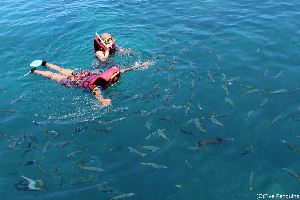 たくさんの魚が集まってくる!