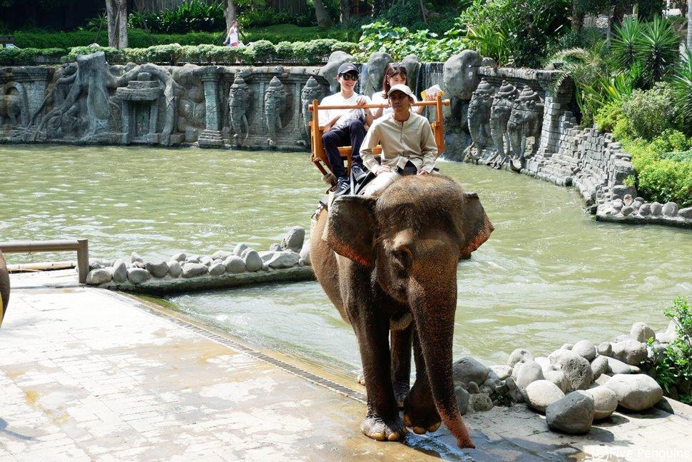 バリ島でゾウと触れ合おう!