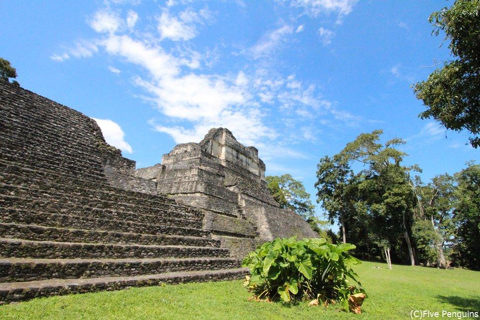 ベリーズを代表する壮大なマヤ遺跡 カラコル遺跡