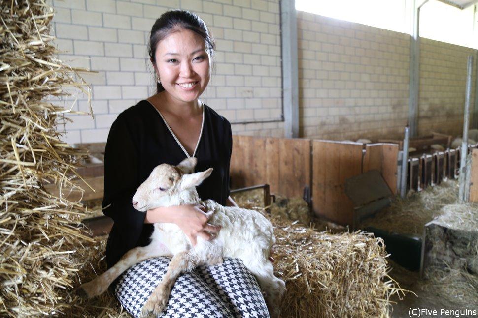 羊の牧場で、赤ちゃん羊を抱っこ