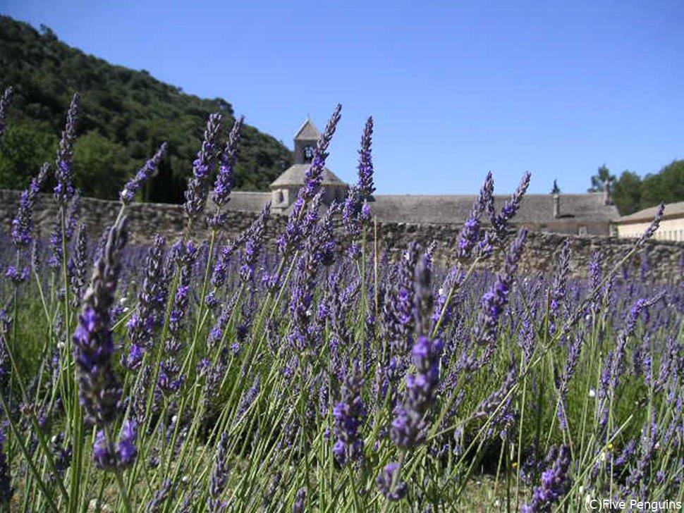 ラベンダー畑とセナンク修道院