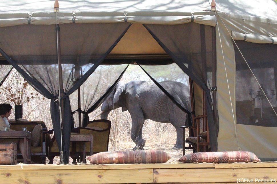 ダイニングテントでのランチ中、象がやって来た!!