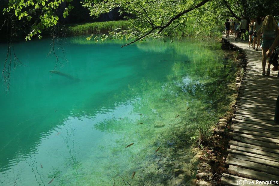 緑豊かな大自然の中でリフレッシュしたい!