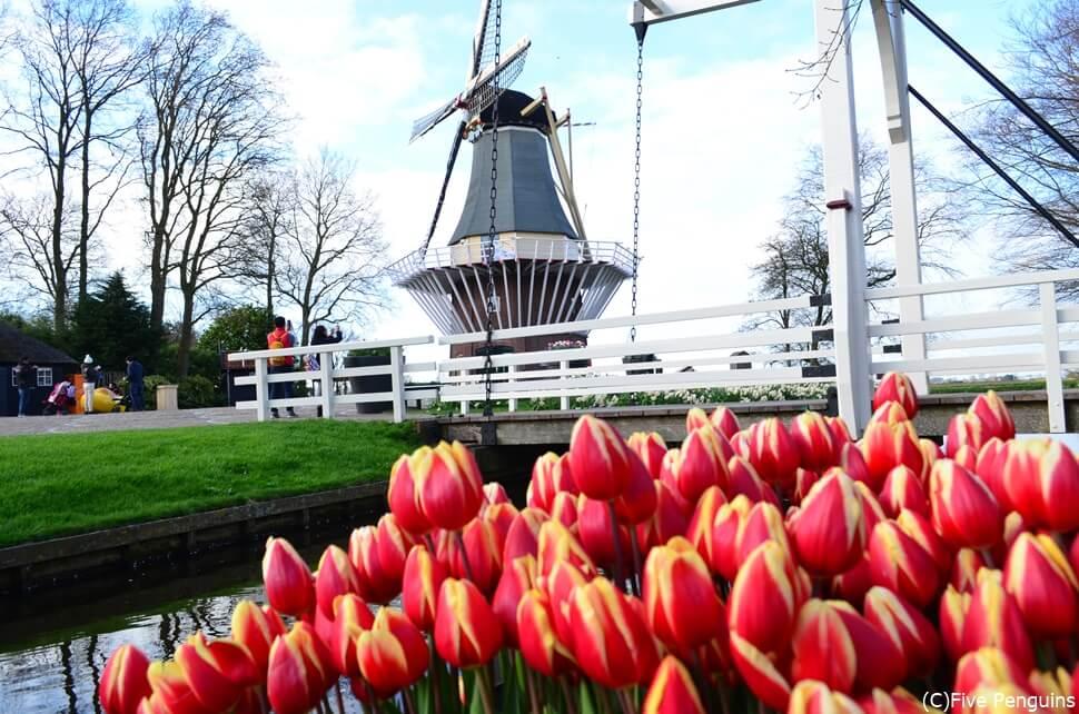 チューリップのシーズンが待ち遠しい オランダのキューケンホフ公園