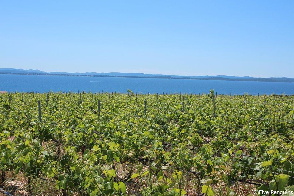 ワイン造りも盛んなクロアチアではゆったりワイナリーを訪れるのもおすすめ