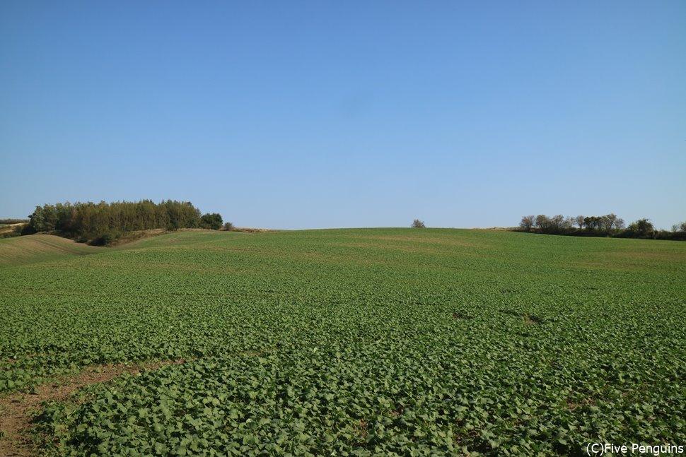 モラヴィア大草原がどこまでも続くヒーリング効果絶大の景勝地
