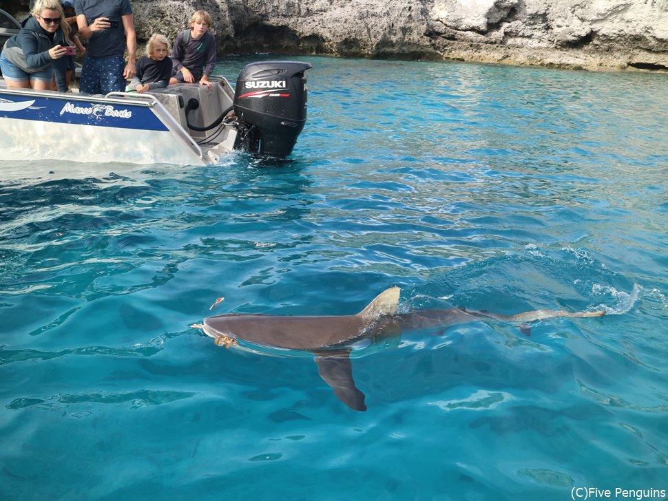 ウベア島近くの無人島にはサメもいる!