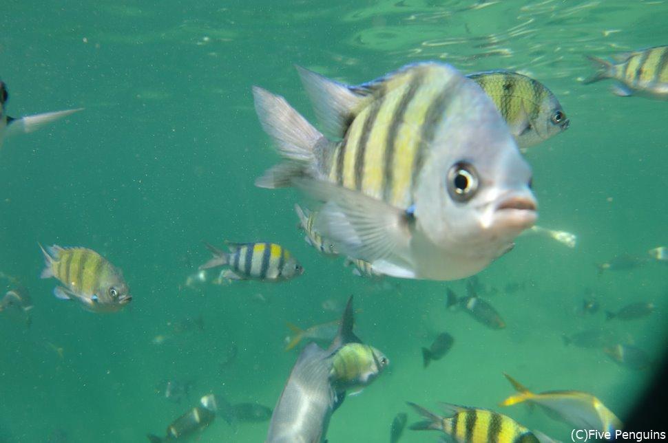 これぞ、お魚天国!ランカウイ島から1時間で行ける離島「パヤ島」にて。