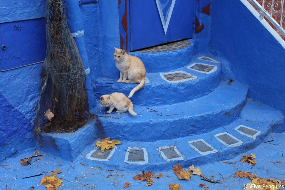青い街シャウエンはにゃんこ好きにもたまらん場所なのです。