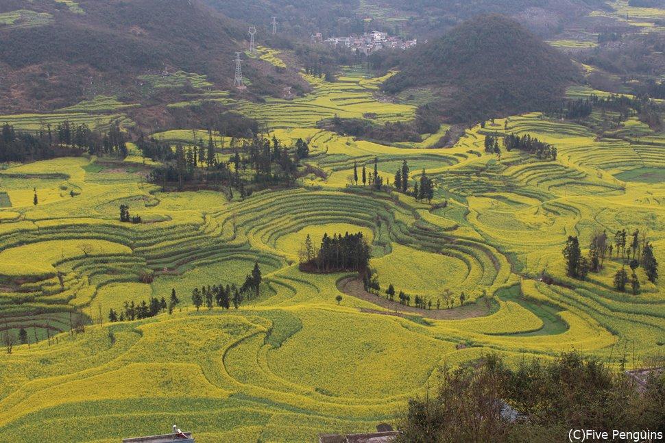 羅平・牛街螺糸田の菜の花畑は季節に注意していきましょう!