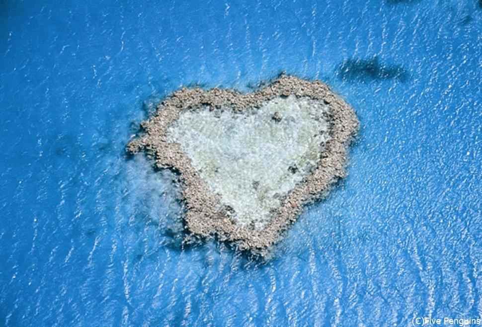 ハミルトン島のハートリーフ、美しさと可愛さの融合です。
