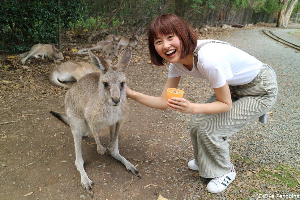 カンガルーに餌やり!ポッケに入っている赤ちゃんカンガルーも見れちゃいます。