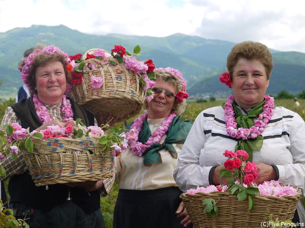 ダマスクローズの収穫は一つ一つ人の手によって摘み取られます。
