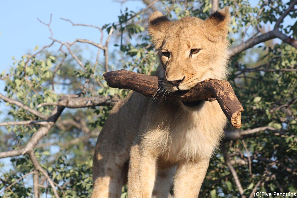 動物との触れ合いが楽しいシュクドゥゲームロッジ(クルーガー国立公園)