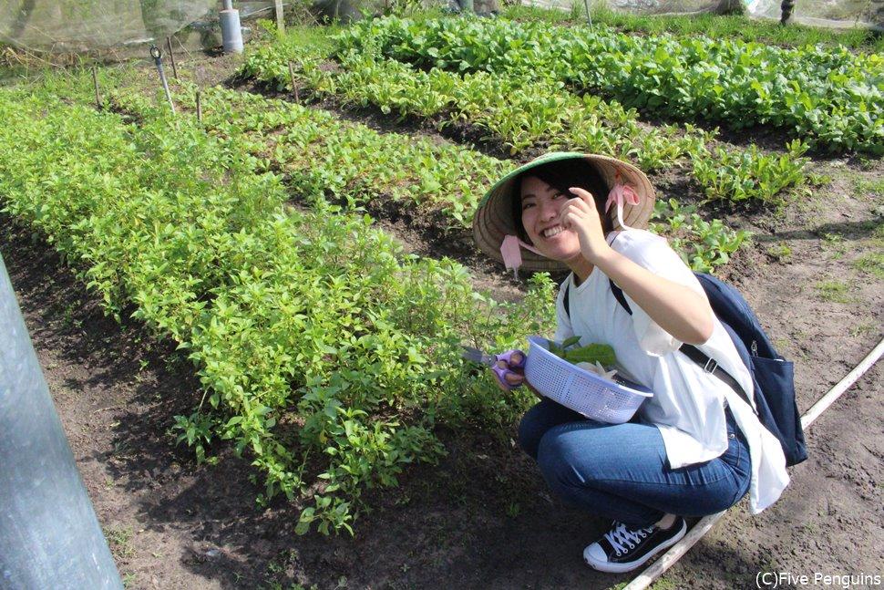 クチのオーガニック農園で野菜の収穫を体験!!