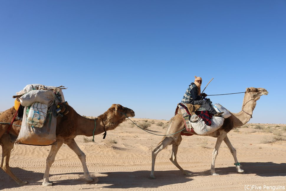 サハラ砂漠のラクダ(ドゥーズ)