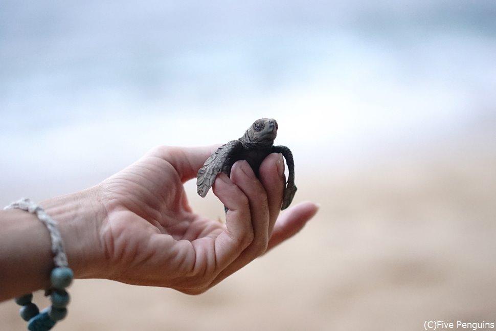 ビーチにはウミガメの赤ちゃんまで…!可愛すぎます!!!