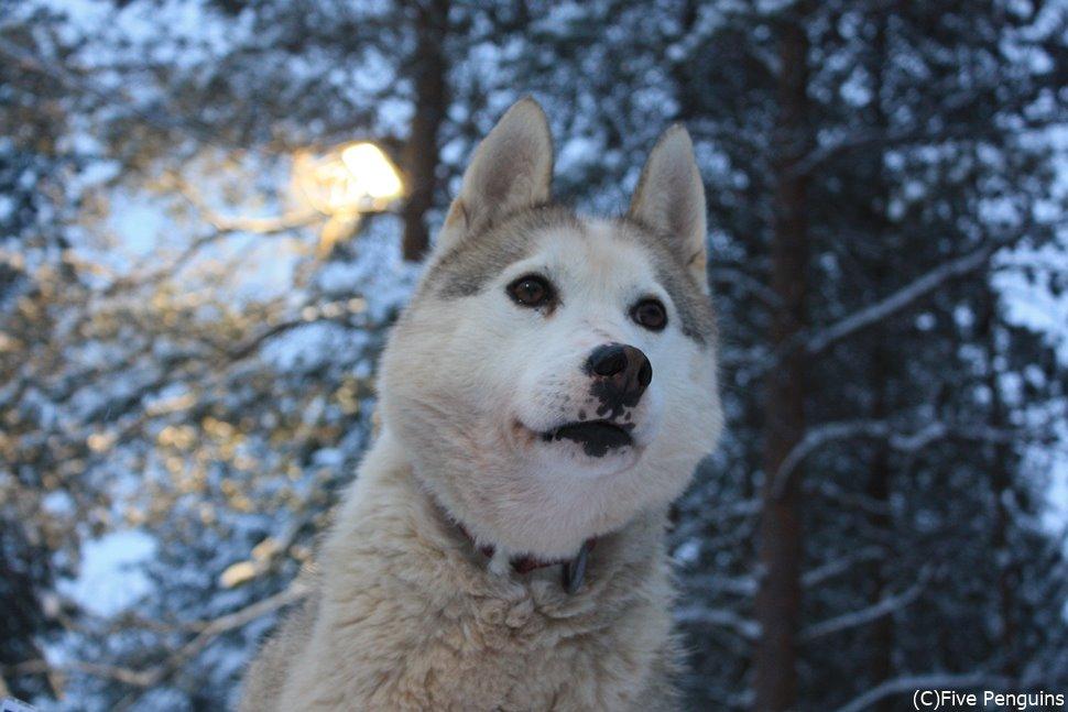 凛々しいハスキー犬との出逢いも嬉しい!