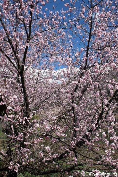 桜も咲くタサンビレッジ