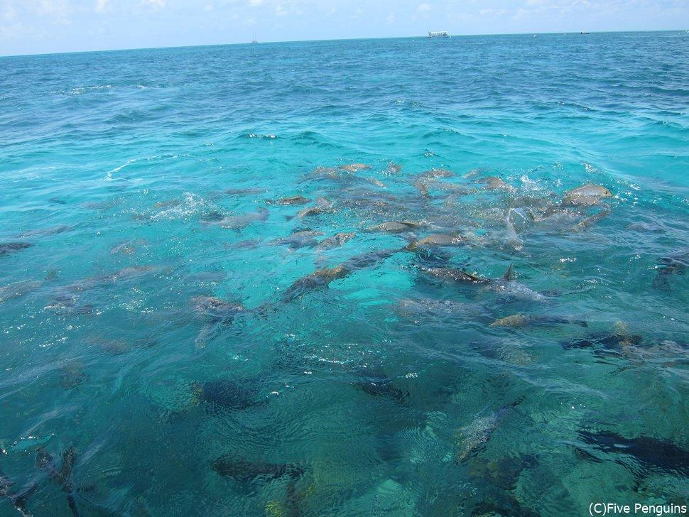 大小たくさんの魚を見ることができます