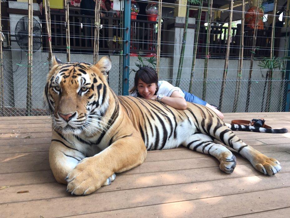 ビッグサイズの虎と私