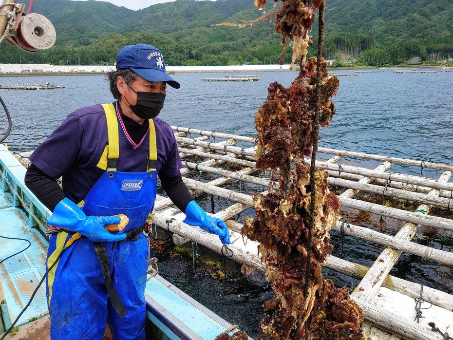 山田湾牡蠣養殖ツアー